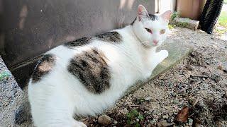 【夏バテ猫】日陰でダラダラと過ごす猫達、エサやりさんの足音で飛び起きる