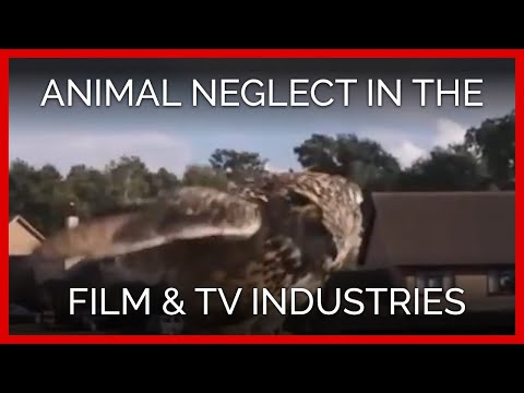 Inside a Major Animal Supplier to the Film and TV Industries