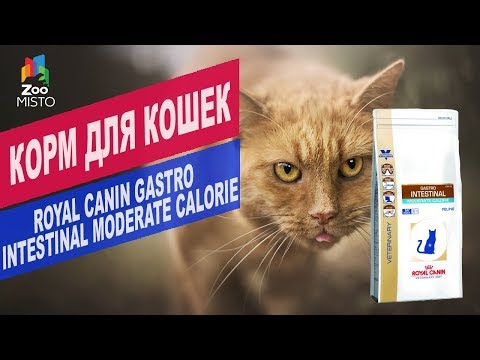 Корм для кошек ROYAL CANIN GASTRO   Обзор Корма для кошек ROYAL CANIN GASTRO