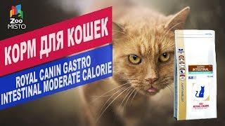 Корм для кошек ROYAL CANIN GASTRO | Обзор Корма для кошек ROYAL CANIN GASTRO