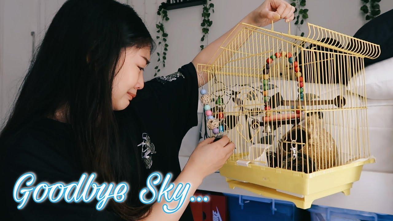 MY BIRD FLEW AWAY (EMOTIONAL) | Shine Mory