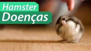 Hamster Doenças