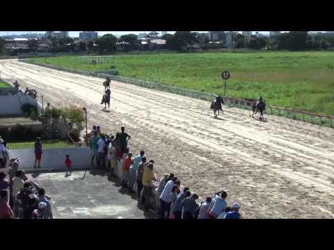 2º Páreo – Prêmio Thiago Godoy – 1.400 metros – 88,5s: 1º Hard Prospector – M.Oliveira