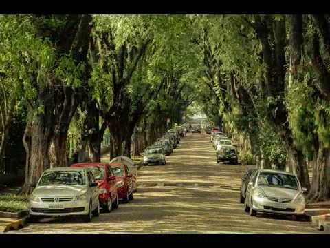 The Most Beautiful Greenery Street in the World, Porto Alegre, Brazil