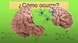 ¿Qué es la esquizofrenia? ENTIENDELO DE UNA VEZ. (con indice)