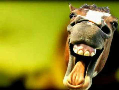 Most Funniest Pictures Of Animals