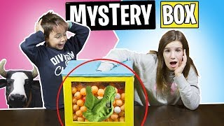 ¿Que HAY en la CAJA? 👤NIVEL MYSTERY BOX // WHATS IN THE BOX?  Sis vs Bro