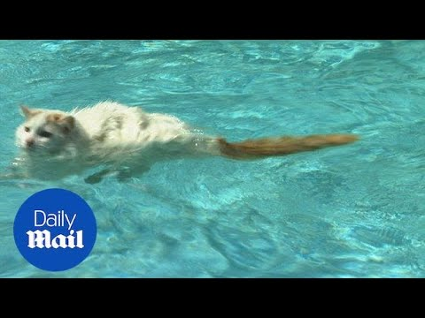 Adorable cat swimming in a pool will melt your heart