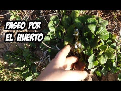 Paseo por el huerto en invierno la huerta de ivan youtube for Preparar el huerto en invierno