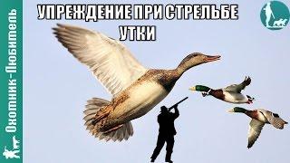 Какое делать упреждение при стрельбе утки на охоте? Охотник-Любитель