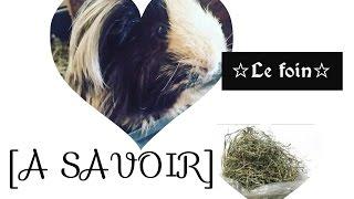 💜[A SAVOIR]💜/Le Foin