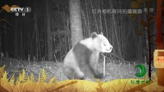 《秘境之眼》 大熊猫 20190114| CCTV