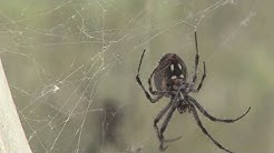 Millions of spiders infest Antelope Island State Park