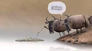 мультфильмы для взрослых без регистрации антилопы