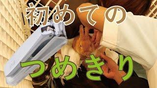 (ウサギ)初めてのつめきり ネザーランドドワーフ