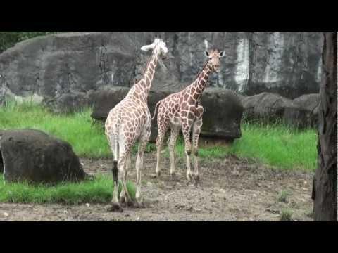 Taipei Zoo Highlights, Taipei, Taiwan, 2/1/2013