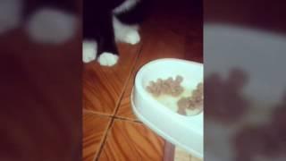Мой кот-человек