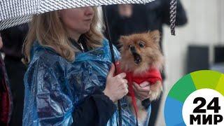 «Всем по собаке»: акция собрала сотни любителей животных в Москве - МИР 24