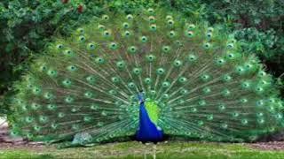 Akash Eto Meghla thumbnail