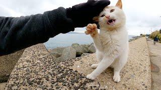 悪ガキみたいな髪型の猫が人間の手をボコボコに攻撃してきた