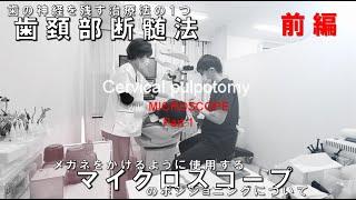 ノーカット 歯頚部断髄法 マイクロスコープのポジショニング 《マイクロスコープによる歯の神経を残す治療》Cervical pulpotomy Microscope