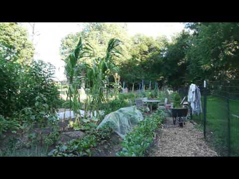 Walking East Woodlawn, the Jackson Park urban garden