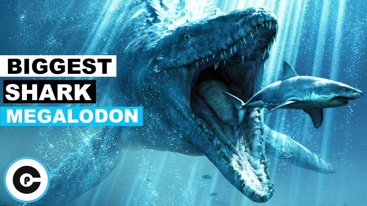 10 Facts About World S Biggest Shark Ever Megalodon