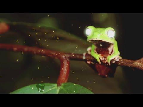 Смотреть клип D-Stroyer - Kika