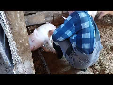 видео: ЗАКУПИЛИ КОРМА  КУРЫ НА ВОЛЕ/ТЕЛЕЖКА МУРАВЕЙ