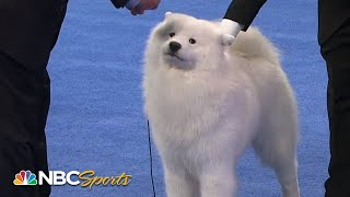 National Dog Show 2014: Best in Show (Full Judging) | NBC Sports