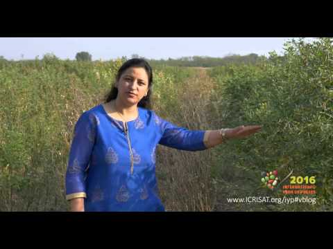 International Year of Pulses 2016 (Insights from Dr Mamta Sharma, ICRISAT)