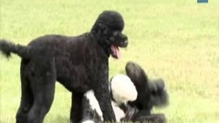 Obama Family Adopts New Dog