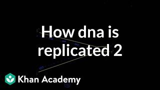 How DNA is replicated 2