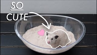 Giving My Hamster A Sand Bath For The First Time