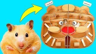 Download Corrida de Hamsters em um labirinto - Quem vai ganhar? Mp3
