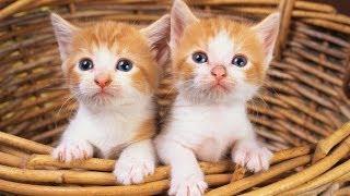 #695. Кошки (В мире животных)