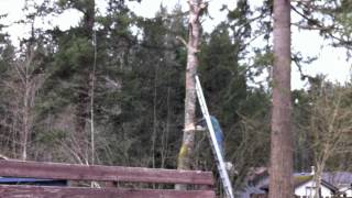 Epic Tree Cutting Fail