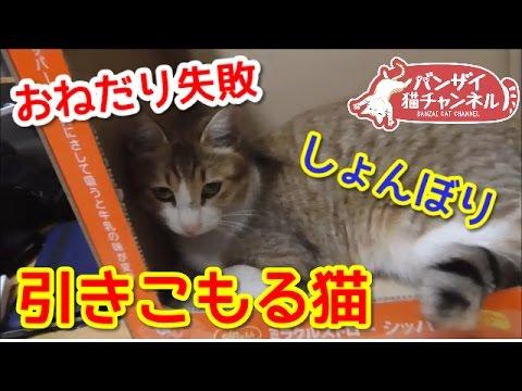 【猫おもしろかわいい】おねだりに失敗してふてくされて箱に篭城する猫。