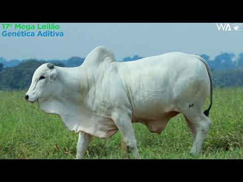 LOTE 93 - REM 10333 - 17º Mega Leilão Genética Aditiva 2020