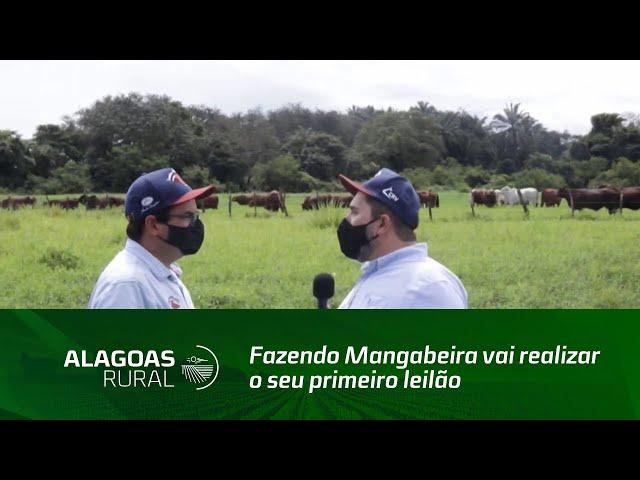 Fazendo Mangabeira vai realizar o seu primeiro leilão exclusivo da raça Santa Gertrudis