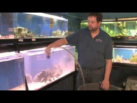 How To Clean Sand In A Fish Tank Youtube