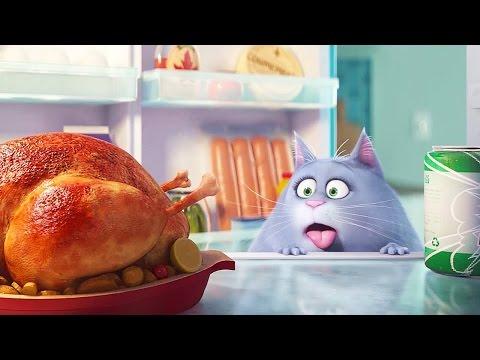 Кадры из фильма Тайная жизнь домашних животных