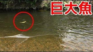 川で投網を打った結果・・・巨大魚が捕れまくる!!