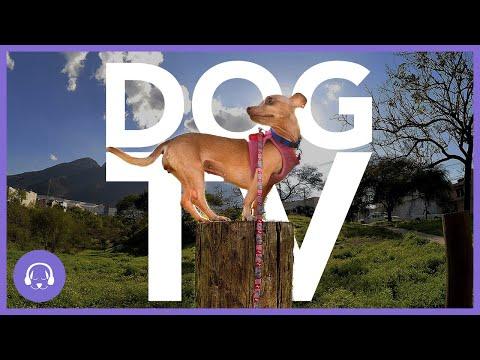 DOG TV: Virtual Dog Walking Entertainment! (8 Hours)