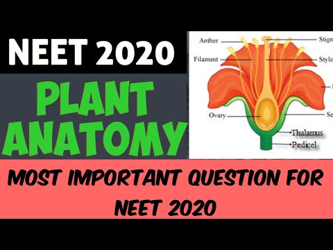 PLANT ANATOMY | NEET 2020 | Most Important Questions.