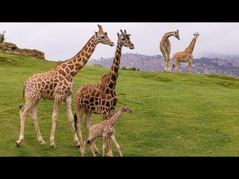 Welcome to the San Diego Zoo Safari Park