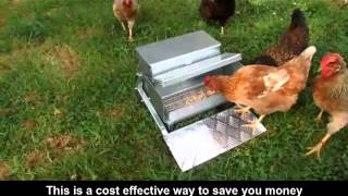 How To Save Money On Chicken Feed! Stop Waste Of Your Chicken Feed So Your Hens Produce Lots Of Eggs