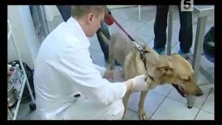 Электронный чип для домашних животных(, 2011-02-15T08:56:24.000Z)