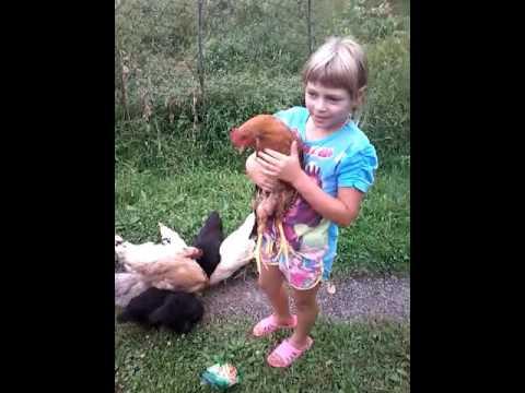 Девочка вырастила цыплят
