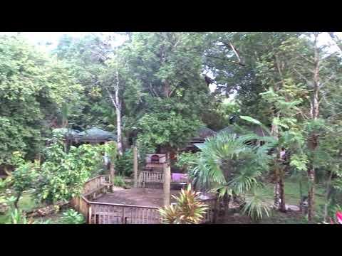 THE SOUND OF HOWLER MONKEYS,TIKAL,GUATEMALA, 2018